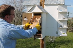 Cleaning-purple-martin-houses